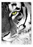 Startonight Leinwand Wand Kunst Schwarz und Weiß Tigeraugen, Doppelansicht Überraschung Modernes Dekor Kunstwerk Gerahmte Wand Kunst 100% Ursprüngliche Fertig zum Aufhängen 60 x 90 CM