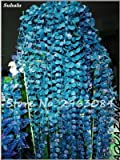 SwansGreen 6: Multi Color Seed Perennial Kräuter Blatt Pflanzen Creeping Rasensämling Seed Interessante Bonsai Blumentopf Hausgarten-Dekor 100 P 6