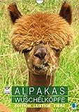Alpakas: Wuschelköpfe - Edition lustige Tiere (Wandkalender 2019 DIN A4 hoch): Alpakas: Wollige Kleinkamele aus Südamerika (Monatskalender, 14 Seiten ) (CALVENDO Tiere)
