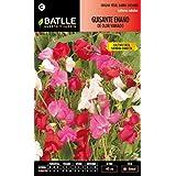 Semillas Batlle 094402BOLS - Guisante enano de olor variado