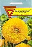 Sonnenblumen, Helianthus annuus fl. pl., Sonnengold, ca. 20 Samen