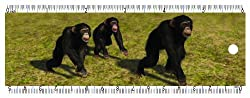 Gift Trenz Design Chimpanzees Bookmark with 6 Ruler and Eraser