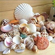 YOSEMITE Conchas de playa de mar, mezcla de conchas de mar naturales, decoración de