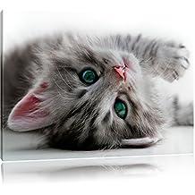 chaton Sweet, Format: 60x40 sur toile, XXL énormes Photos complètement encadrées avec civière, impression d'art sur murale avec cadre, moins cher que la peinture ou une peinture à l'huile, pas une affiche ou une bannière,