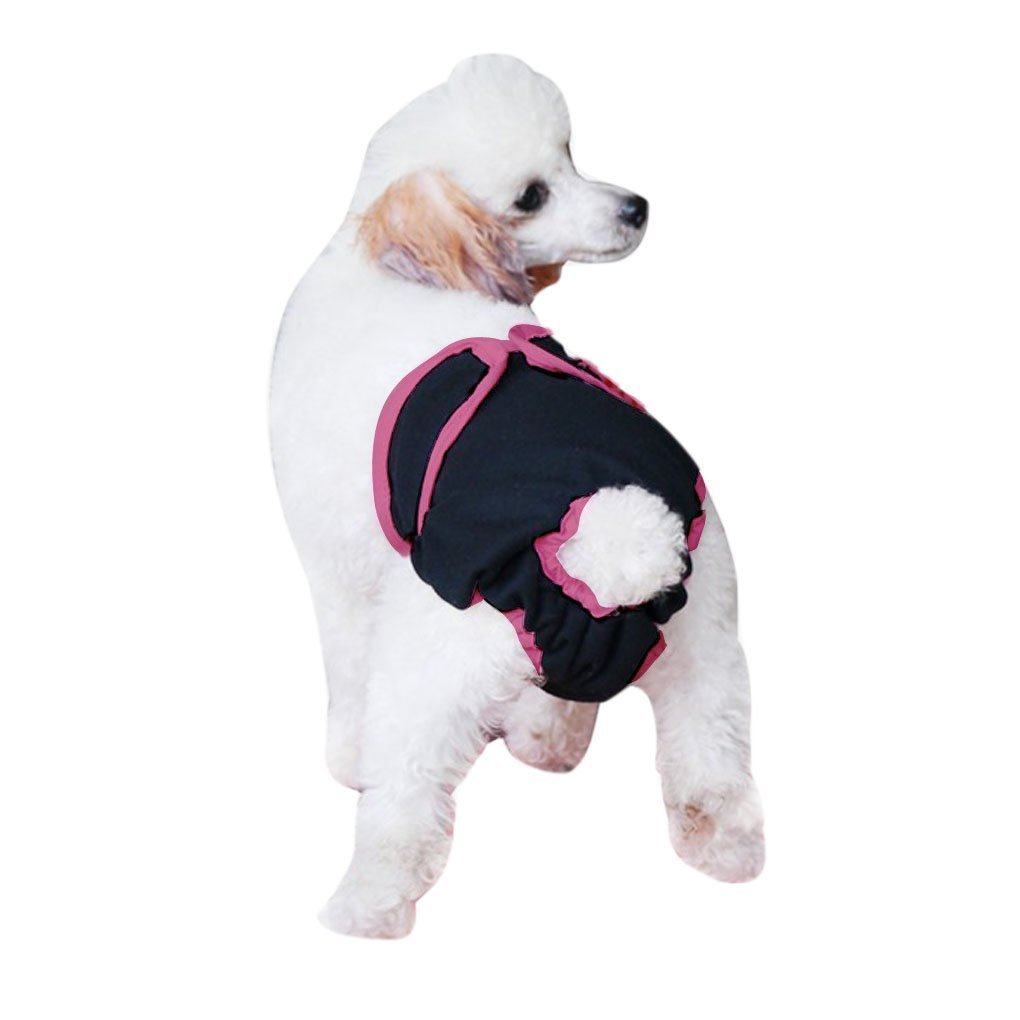 after neutering, Causes of Male Dog Incontinence After Neutering, Dog Incontinence
