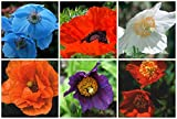 RP Seeds Poppy Seed Collection - 6 Packets. Save over 30% on normal prices.