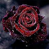 TianMai Heiß Neu DIY 5D Diamant Malerei Kit Kristalle Diamant Stickerei Strass Malerei Kleben Malen nach Zahlen Stich Kunst Kit Zuhause Dekor Mauer Aufkleber - Morgen Tau & Rose, 30x30cm