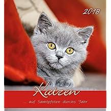 Katzen 2018 - Cats - Postkartenkalender (15 x 16)