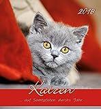 Herlitz 50011148 Postkartenkalender 2018 Katzen