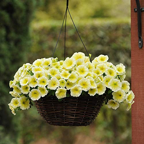 Tomasa Samenhaus-100pcs Rare Petunien Blumensamen gemischte Farben Blume Staude Bonsai mehrjährig winterhart Leuchten Ihren Garten -