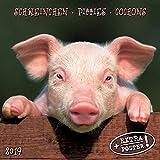 Piggies/Schweinchen 2019: Kalender 2019 (Artwork Edition)