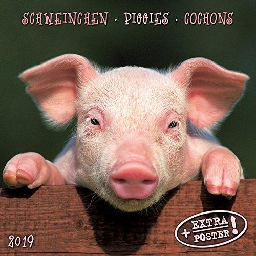 Piggies/Schweinchen 2019: Kalender 2019 (Artwork Edition) - Piggy Italienisch