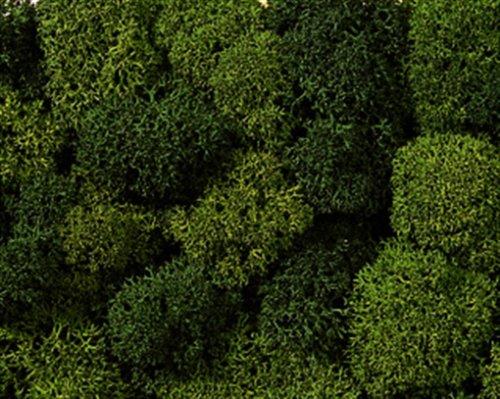 NOCH 08610 - Spielwaren, Dekormoos, hell und dunkelgrün, Sortiert - Künstliche Kleiner Adventskranz