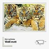 Kunstdruck Poster - Little Tiger Babys Cups kleine Tiger