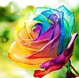 Regenbogen Rose / Einhornrose / Bunte Rose / ca. 50 Samen / Rosensamen / Geschenk für Verliebte / Geburtstagsgeschenk