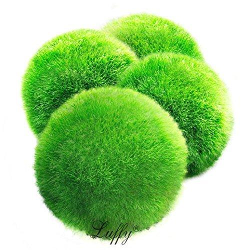 LUFFY Moss Balls...