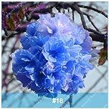 Virtue ZKLING 20 Stücke Japanische Sakura Bonsai Blume Kirschblüten Kirschbaum Zierpflanze: 18