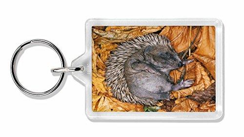 Preisvergleich Produktbild Schlafendes Baby Hedgehog Foto Schlüsselbund TierstrumpffüllerGeschenk
