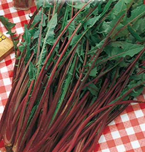 inception pro infinite 5000 c.ca semi cicoria catalogna rossa italiana - cichorium intybus - in confezione originale - prodotto in italia - cicorie - cg010