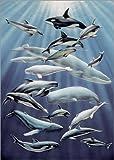 Posterlounge Alu Dibond 70 x 100 cm: Illustration, Delphine, Wale, unterschiedlich Airbrush-Bild, Unterwasseraufnahme, Delphin, Wal, Arte von Ace/Mauritius Images