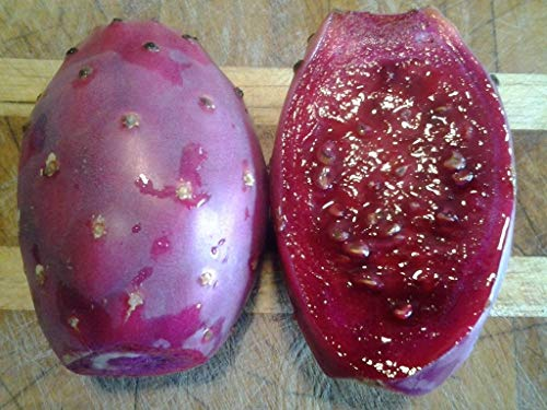 Generic Seeds: Samen, Maroon Obst Birne, Ficus, Pad, Nopal -