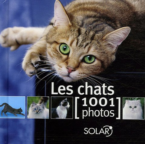 chats-en-1001-photos