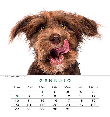 Zoom IMG-1 edizioni calendario cani 2020 da
