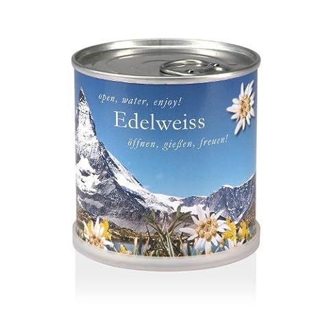 Extragifts Blumen in der Dose - Edelweiss
