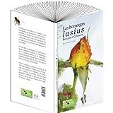 Las hormigas lasius: biología y cuidados
