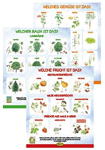 Poster-Set Die Natur-Entdecker