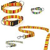 CarlCurt - Design Line: Hundehalsband & Hundeleine Im Set, Aus Strapazierfähigem Polyester, L 40-63cm & L 1,90m, Orange