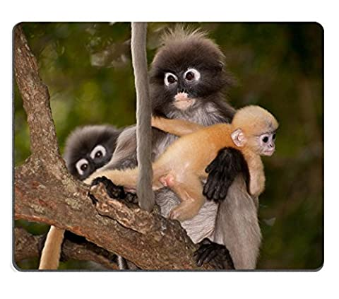 MSD Natural Rubber Gaming Mousepad IMAGE ID 26177373 Monkey mother and her baby on tree