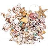 Conchas naturales conchas de playa conchas de boda...