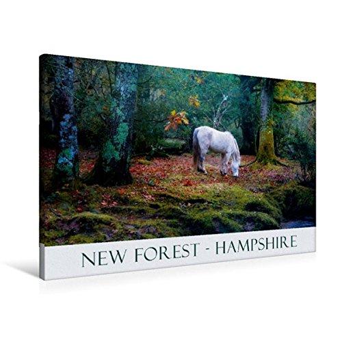 Premium Textil-Leinwand 90 cm x 60 cm quer, Ein Bild aus dem Kalender New Forest Hampshire | Wandbild, Bild auf Keilrahmen, Fertigbild auf echter Leinwand, Leinwanddruck (CALVENDO Natur) (New Hampshire-kalender)