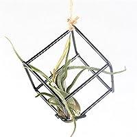 Stile rustico porta libera installazione Tillandsia Air per piante da appendere in metallo nero, bronzo 8cm x 8cm, altezza Quadrilateral a forma di cubo geometrico (Nero)