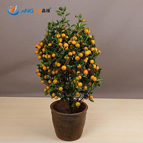 100-piezas-de-frutas-comestibles-mandarin-interior-semillas-bonsai-bonsai-arbol-de-citricos-mandarin