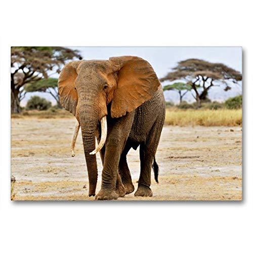 Calvendo Premium Lienzo 90 cm x 60 cm Horizontal, Elefante en Amboseli, Imagen sobre Bastidor, Listo para Lienzo auténtico, impresión en Lienzo: un Calendario Elefantes africanos Animales Animales