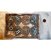Septarie, Geode, große Septarien, 8 Stück, ca. 595g, mit wunderschönen Strukturen. preisvergleich bei billige-tabletten.eu