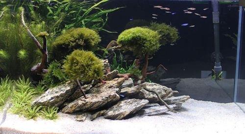 Aquarium Rock Fish Tank Decoration Slate 100% Natural Ideal For Caves WOOD STONE 10kg Set 3