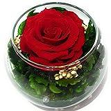 Rosen-Te-Amo Konservierte ewige rote Rose in der Kugel Vase, Blumenstrauß im Glas mit Liebe gefertigt aus 100% echte Deko-Pflanzen; Infinity Deko-Blumen