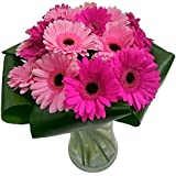 Clare Florist Gorgeous Gerbera Gem Fresh Flower Bouquet - Colourful Arrangement of Germini Flowers Hand Designed by Florists for All Occasions