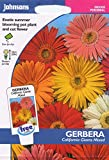 johnsons seeds - Pictorial Pack - Fiore - Gerbera California Giganti Mix - 25 Semi