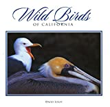 Wild Birds of California (Companion Press Series) by David Lukas (2000-06-02)