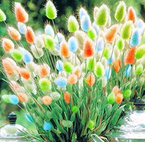 Xianjia Garten