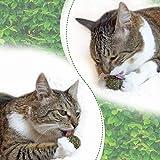 3x Katzenminze Ball | Naturprodukt | Besteht aus 100% natürlicher Katzenminze | Entspannung für Katzen | Katzenspielzeug | Fördert den natürlichen Spieltrieb | Unterstützt die Zahnpflege | 1A Qualität - 8