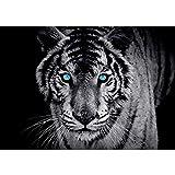 Vlies Fototapete 200x140 cm PREMIUM PLUS Wand Foto Tapete Wand Bild Vliestapete - Tiere Tapete Tiger Gesicht Auge blau schwarz-weiß blau - no. 426