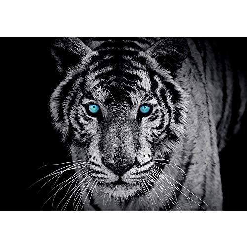 Vlies Fototapete 350x245 cm PREMIUM PLUS Wand Foto Tapete Wand Bild Vliestapete - Tiere Tapete Tiger Gesicht Auge blau schwarz-weiß blau - no. 426