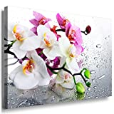 Orchidee Leinwandbild LaraArt Bilder Mehrfarbig Wandbild 120 x 80 cm