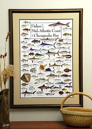 Earth Sky & Wasser Poster-Fische mit der midatlantic Coast & Chesapeake Bay -