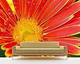Vlies Fototapete - orangefarbige Gerbera - 75x50 cm - Inklusive Kleister - Tapetenkleister – Bild auf Tapete – Bildtapete – Foto auf Tapeten – Wand – Wandtapete – Vliestapete – Wanddeko - Design